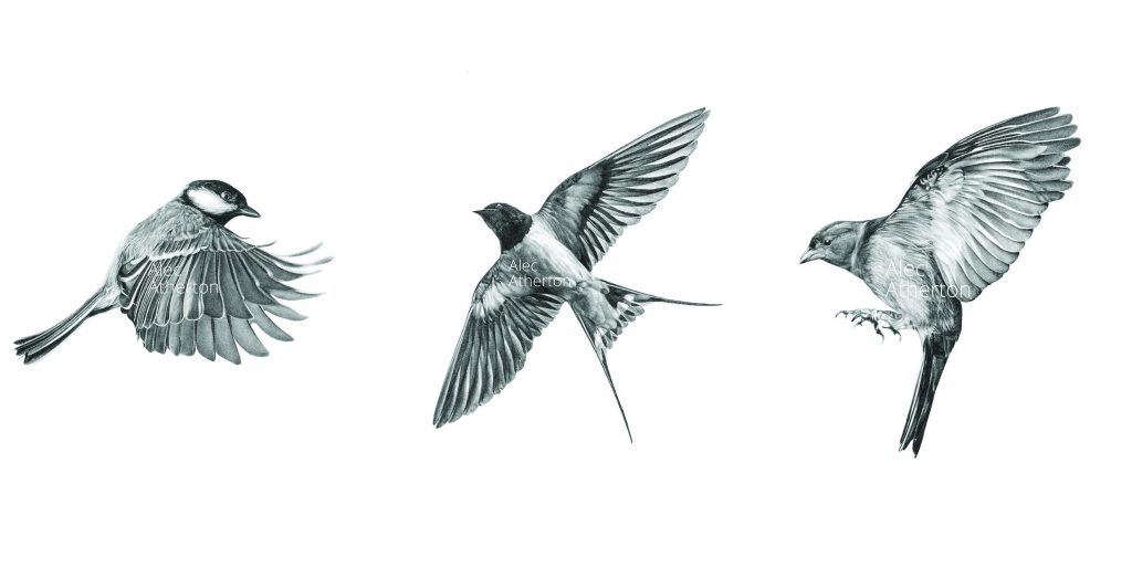 trio of Birds by Alec Atherton for Heart Gallery